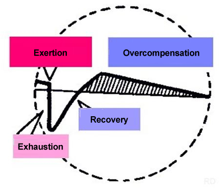 Sufficient recovery leads to over-compensation and an improvement in performance.